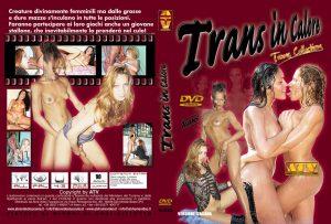 ad633-TransInCalore.jpg